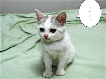 子猫ちゃんの行く末-5コマ