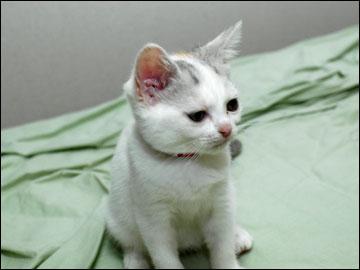 子猫ちゃんの行く末-6コマ