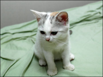 子猫ちゃんの行く末-7コマ