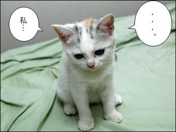子猫ちゃんの行く末-8コマ