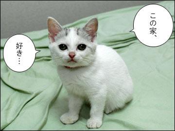 子猫ちゃんの行く末-9コマ
