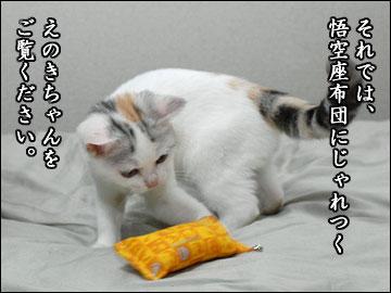 えのき用、悟空座布団-3コマ
