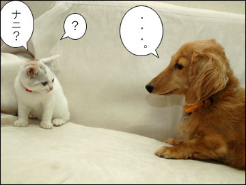 白いネコは何をくれた?-3コマ