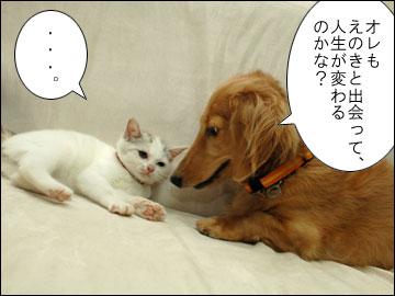 白いネコは何をくれた?-4コマ