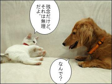 白いネコは何をくれた?-5コマ