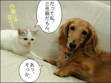 白いネコは何をくれた?-6コマ