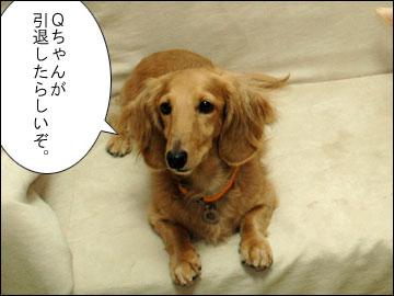 Qちゃんの引退-1コマ