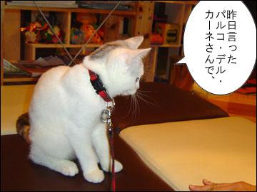ワンコ豆腐-1コマ