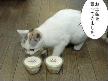 ワンコ豆腐-2コマ
