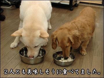 ワンコ豆腐-4コマ