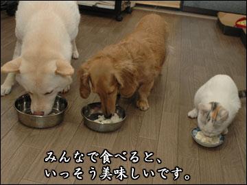 ワンコ豆腐-6コマ