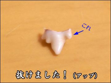 えのきの乳歯-2コマ