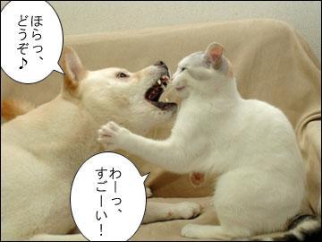 えのきの乳歯-7コマ