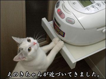 炊きたてご飯-3コマ