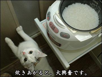 炊きたてご飯-4コマ