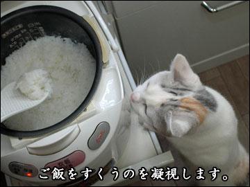 炊きたてご飯-5コマ