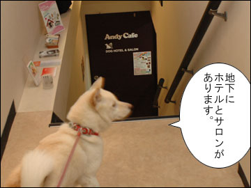 Andy Cafeのサロン-1コマ
