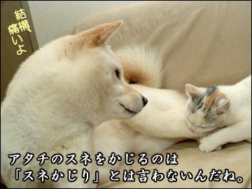 スネかじり-4コマ