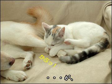 おスネかじり虫-4コマ