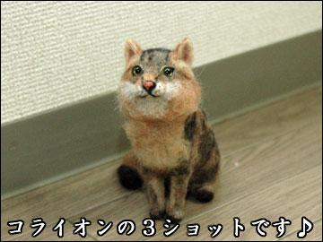3匹のネコの絵-5コマ