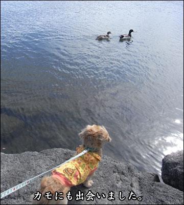 河口湖旅行記-1コマ