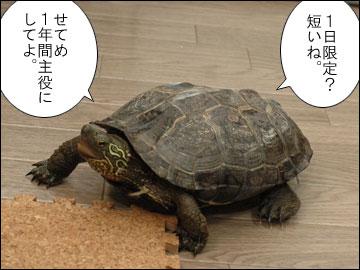 第一回、厚揚げ劇場 名脇役チャンピオン-4コマ