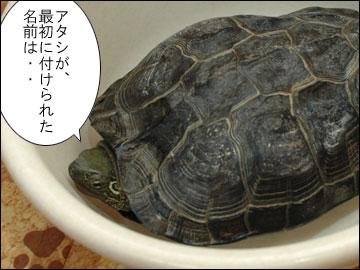 「まりりん」の由来-1コマ