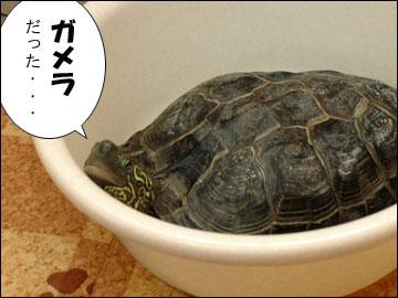「まりりん」の由来-2コマ