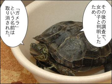 「まりりん」の由来-3コマ