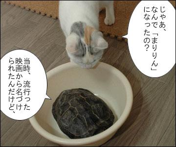 「まりりん」の由来-4コマ