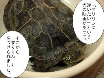「まりりん」の由来-6コマ