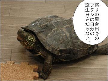 まりりんの誕生日-1コマ