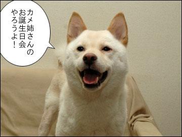 まりりんの誕生日-3コマ