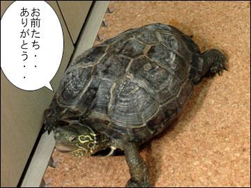 まりりんの誕生日-7コマ