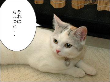 まりりんの誕生日-10コマ