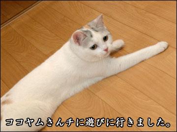 ココヤムさんチで-1コマ