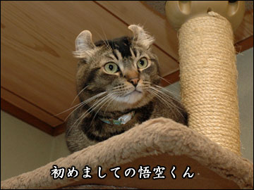 ココヤムさんチで-2コマ