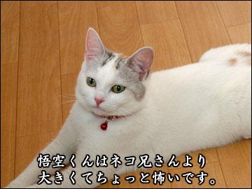 ココヤムさんチで-3コマ