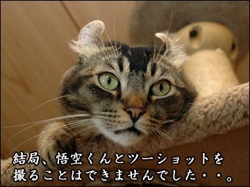 ココヤムさんチで-9コマ