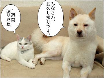 週刊 厚揚げ-1コマ