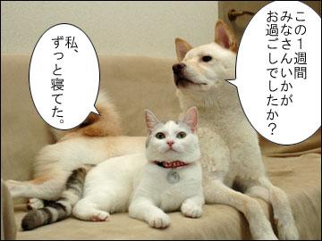 週刊 厚揚げ-2コマ