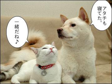 週刊 厚揚げ-3コマ