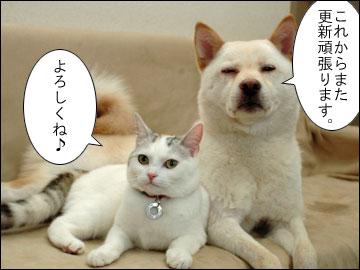 週刊 厚揚げ-4コマ