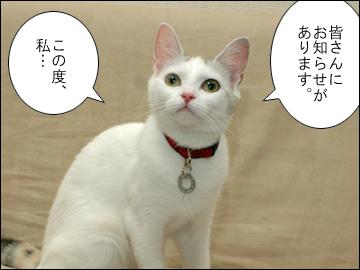猫生活-1コマ