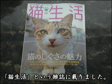 猫生活-2コマ