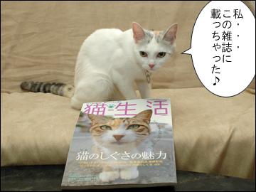 猫生活-3コマ