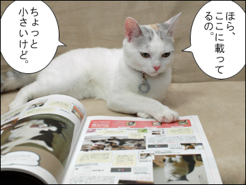 猫生活-4コマ