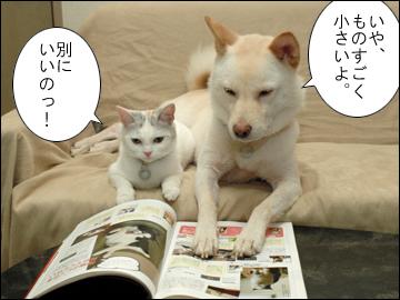 猫生活-5コマ