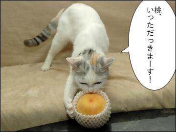 桃の試練-1コマ