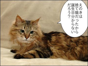 えのきちゃんの誕生日-3コマ